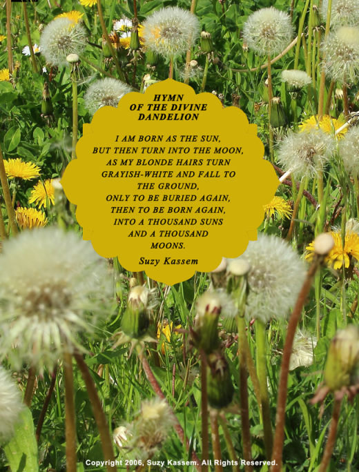 HYMN OF THE DIVINE DANDELION - Suzy Kassem poetry - Dandelion poem