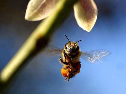 The three bees - Suzy Kassem poetry