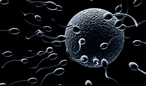 sperm-race